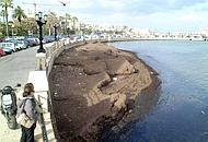 A Bari c'è l'alga tossica: aggiornamento su situazione del litorale della provincia barese