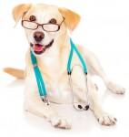 Test ammissione medicina 2013: tutto su come si è svolta  la prova