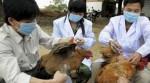 Aviaria-Cina-primo-contagio-uomo-a-uomo-rischi-e-sintomi