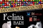 PalaFlorio Bari: concorso di bellezza  gatti il 21 il 22 settembre 2013