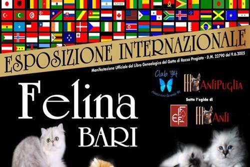 PalaFlorio Bari: concorso di bellezza  gatti il 21 e il 22 settembre 2013