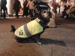 A Sanremo un cane di nome Camillo ha una vita da pendolare, per spostarsi usa l'autobus