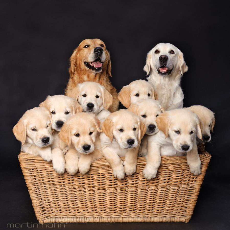 Avere-un-cane-porta-benefici-al-cuore-e-fa-ringiovanire-di-10-anni
