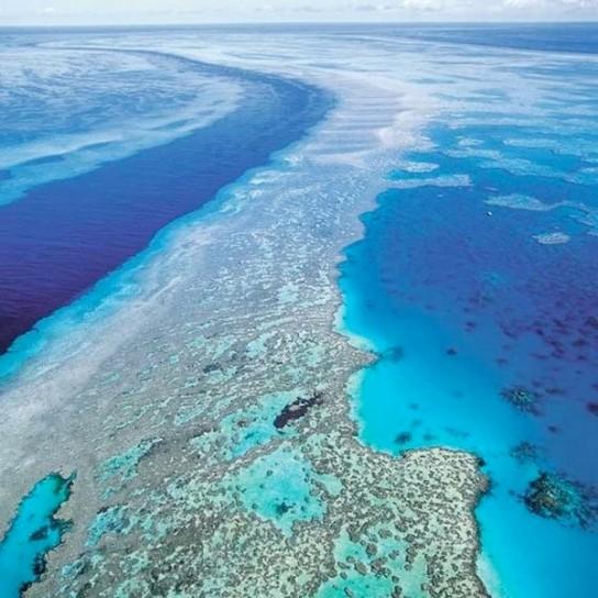 Barriera-corallina-Caraibi-per-incuria-uomo-rischia-l-estinzione
