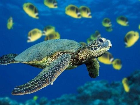 Lampedusa salvata una rara tartaruga gigante dal peso di oltre 250 chilogrammi