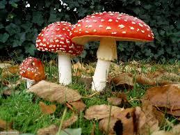 Funghi-la-raccolta-è-già-iniziata-ma-attenzione-ai-consigli-della-Guardia-Forestale
