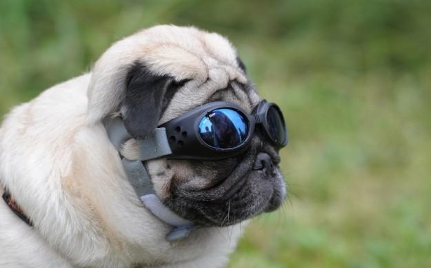 Cani-nuova-moda-del-lifting-incrementati-dell-80%-gli-interventi-chirurgici