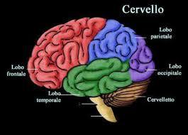 Tumore al cervello, una proteina la salvezza per le donne