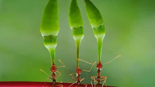 Pennichella fatale, si appisola sotto un albero e viene mangiato vivo da migliaia di formiche