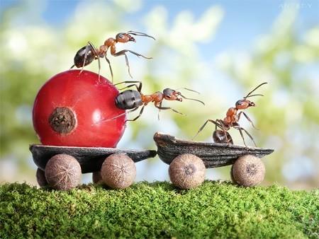 Formiche danno un piccolo contributo alla conservazione del clima