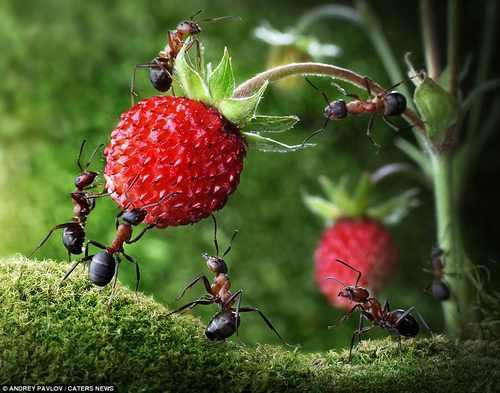 Le formiche trattengono anidride carbonica difendendo la Terra dall'effetto serra