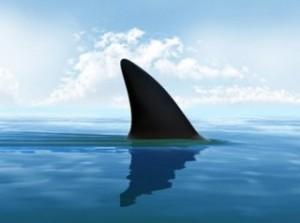 Sardegna-squalo-impigliato-all-amo-salvato-dai-bagnanti