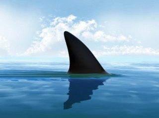 Terrore a Polignano, gruppo di turisti non crede ai propri occhi, uno squalo sbrana un delfino
