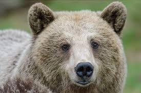 Pinzolo-orso-Daniza-manifestazione-ambientalisti-finisce-quasi-in-rissa