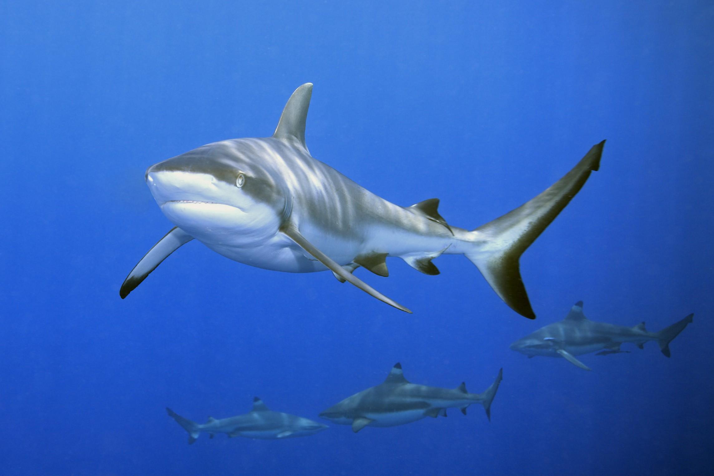 Ostia-avvistato-squalo-in-mare-rivissute-scene-della-saga-film-di-Spielberg