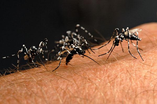 Soliera, ultime news su donna colpita da virus Chikungunya, comune esegue disinfestazione