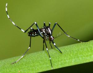 Zanzare-studio-rivela-che-impossibile-evitare-le-punture