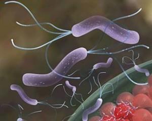Allarme-Amcli-in-aumento-i-casi-in-Italia-di-tubercolosi-resistente-agli-antibiotici