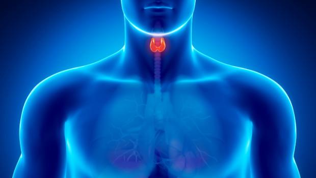 Tiroide in provetta sarà possibile crearla grazie alle cellule staminali