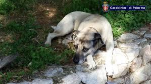 Misilmeri-choc-bimbo-di-soli-due-anni-azzannato-alla-testa-dal-suo-cane