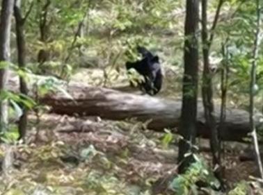 New -ersey-ragazzo-fotografa-orso-ma-il-grosso-animale-lo-uccide