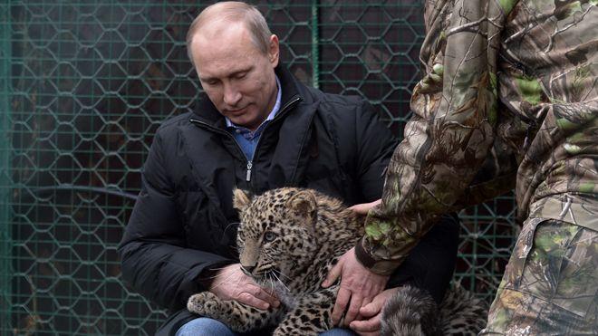 Putin libera due tigri siberiane che in Cina azzannano 13 capre