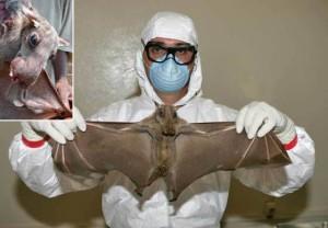 Ebola-il-primo-paziente-era-un-bambino-contagiato-da-pipistrelli