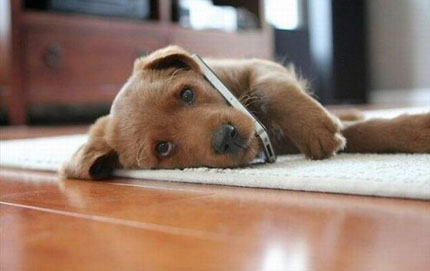 I-cani-sono-in-grado-di-capire-il-linguaggio-dell-uomo