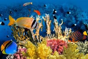 Oceano-Pacifico-coralli-stanno-perdendo-il-colore-naturale
