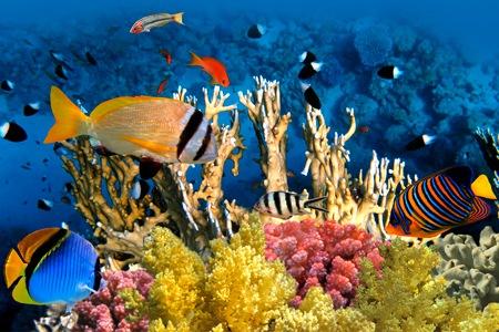 Oceano Pacifico,coralli stanno perdendo il colore naturale