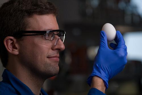 Uovo sodo può tornare ad essere liquido, importante scoperta contro il cancro