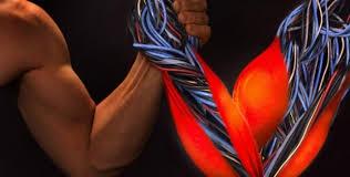 Usa, ricercatori hanno creato muscoli in laboratorio