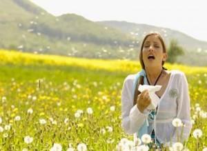 Allergia da polline, in arrivo in tutta Europa l'Ambrosia