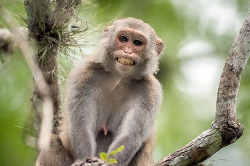 India-choc-bambino-disabile-strangolato-da-scimmia