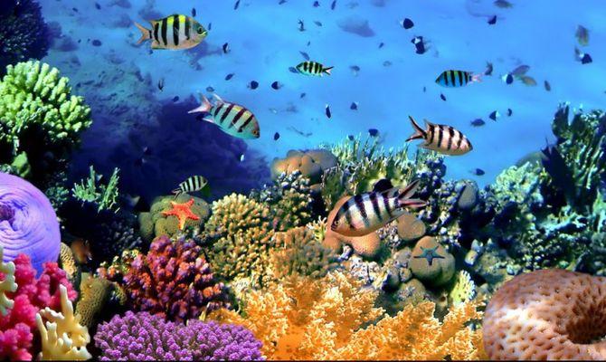 Barriere coralline a rischio: solo la geoingegneria può preservarle