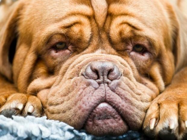 Il fiuto dei cani annusa il cancro alla prostata e al seno