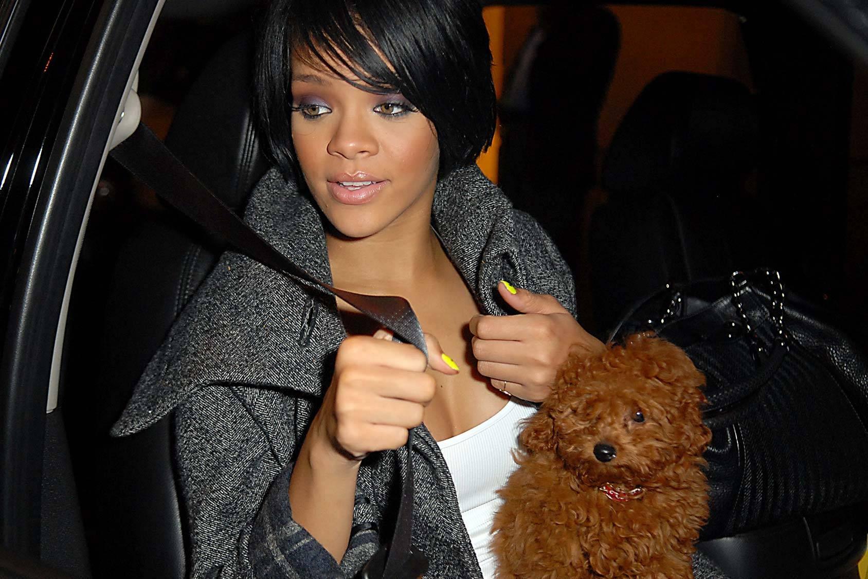 Rihanna-trova-un-cagnolino-nei-bagni-di-un-locale-e-lo-adotta