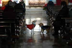 Alassio-parroco-caccia-due-fedeli-perché-a-messa-con-il-cane