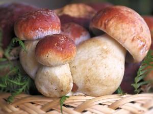 Torino-avvelenate-da-funghi-sette-persone-tra-cui-una-bambina