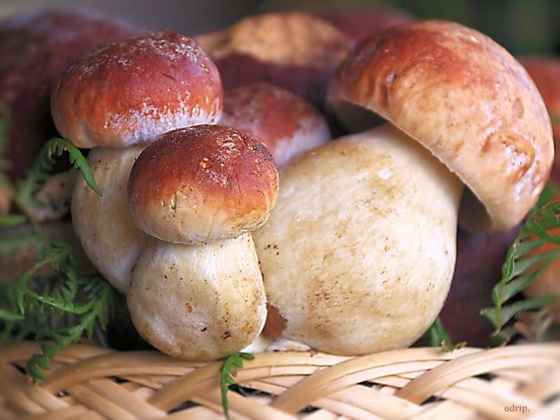 Perugia-mangiano-funghi-si-sentono-male-quattro-persone-ricoverate