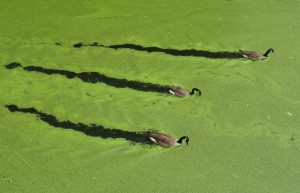Le-Alghe-salveranno-la-nostra-salute