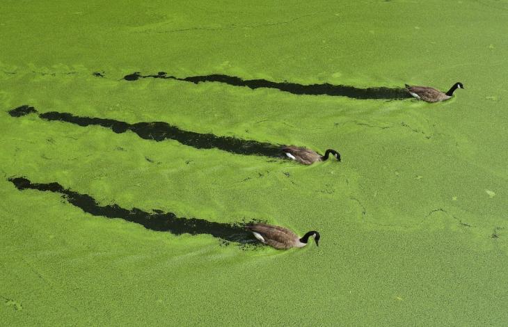 Le Alghe salveranno la nostra salute?