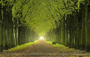 Terra-è-verde-ci-sono-più-alberi-del-previsto-422-per-abitante