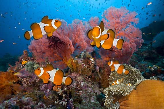 Barriere-coralline-le-sta-distruggendo-l-oxybenzone-sostanza-delle-creme-solari