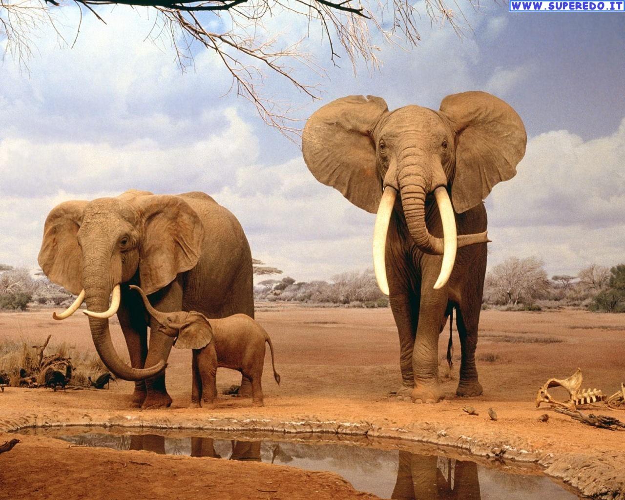 Cancro, il segreto per sconfiggerlo è un gene del dna degli elefanti