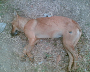 Palermo-cane-gettato-vivo-in- un-cassonetto-con-una-siringa-al-collo