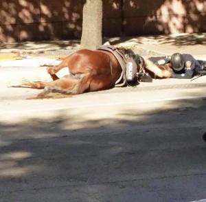 Usa-l-abbraccio-tra-il-cavallo-morente-e-il-poliziotto-commuove-il-web