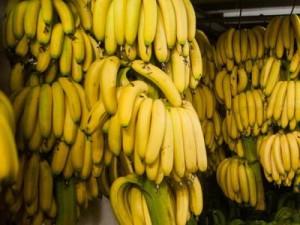 Banane-a-rischio-estinzione-a-causa-di-un-fungo-parassita
