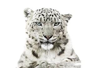 Calendario-Wwf-le-foto-più-belle-degli-animali-in-via-di-estinzione