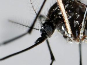 Paura-in-Brasile-per-virus-Zika-molti-i-casi-provoca-la-microcefalia